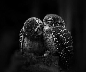 love, owl, and kiss image