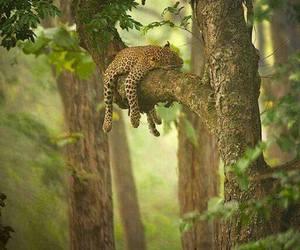 brasil, wonderful, and nature image
