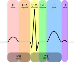 ekg and nursing image