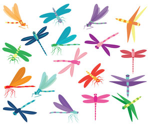 dragonflies, insect images, and dragonfly clip art image