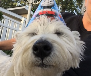 party time, my dog, and westie image