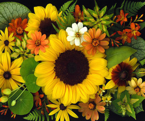 autumn, sunflowers, and daisies image