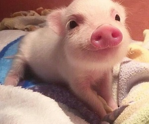 pig, animal, and cute image