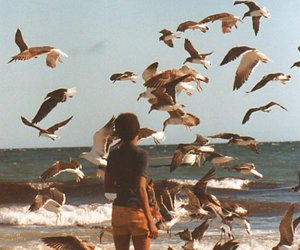 bird, beach, and vintage image