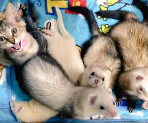 cats and otter image