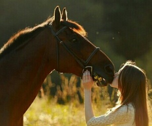 animal, nature, and love image