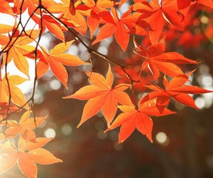 orange, red, and autumn image