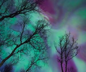 tree, northern lights, and purple image