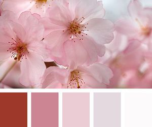 flowers and color palettes image