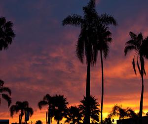 palm trees, sunrise, and sunset image