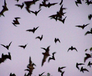 bats, grunge, and sky image