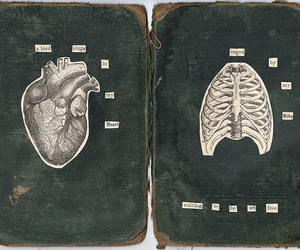 heart and ribs image