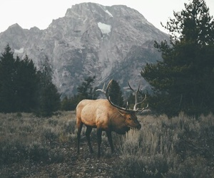 animal, nature, and mountains image