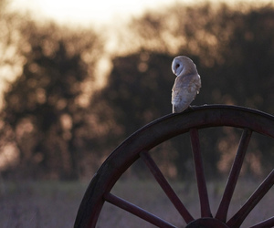 owl, bird, and photography image