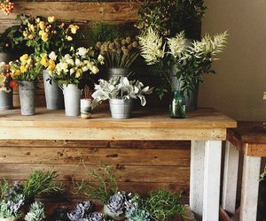 flowers, plants, and nature image