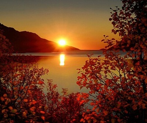 autumn, sun, and nature image