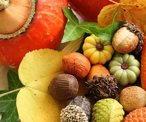 autumn, nuts, and fall image
