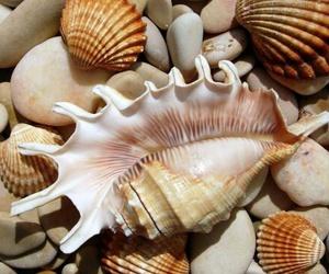 seashells image