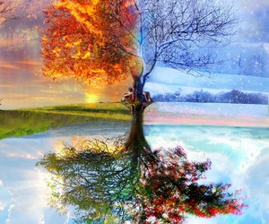 tree, season, and summer image