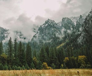 grunge, urban outfitters, and nature image