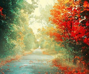 nature, wallpaper, and autumn image