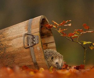 cute, autumn, and animal image
