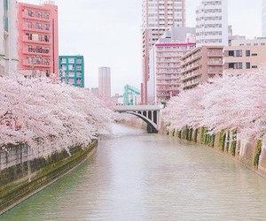 pink, japan, and sakura image