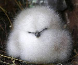 bird, animal, and fluffy image