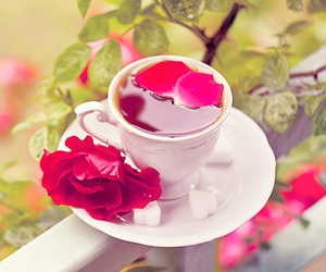 tea and rose image