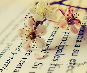 flowers, book, and text image