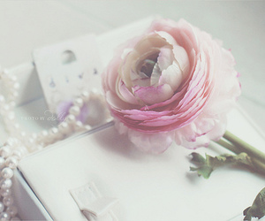 rose, fashion, and pastel image