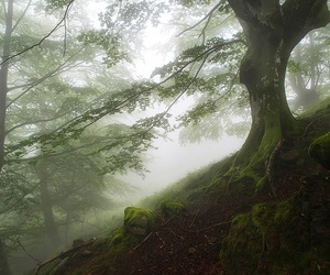 forest, moss, and photography image