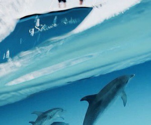 dolphins, ocean, and summer image
