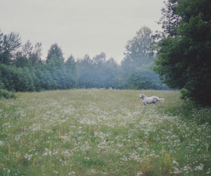 horse, nature, and field image