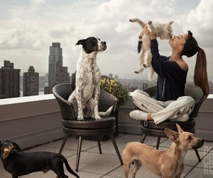 ariana grande, dog, and billboard image