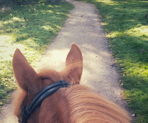 enjoy, equestrian, and horse image