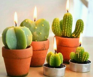 candle, cactus, and green image