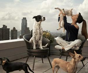 ariana grande, dog, and billboard image