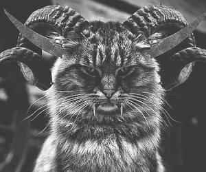 cat, Devil, and evil image