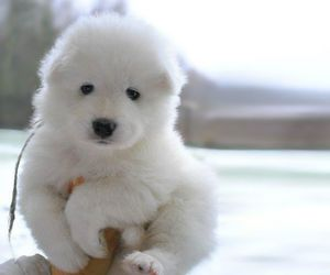 dog, puppy, and white image