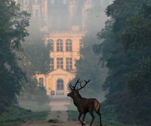 deer, castle, and france image