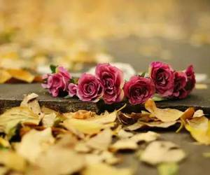 fall, leaves, and rose flower image