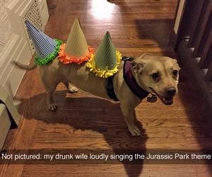 funny and dog image