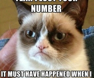 funny, grumpy cat, and delete image