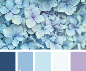blue, flowers, and color palettes image