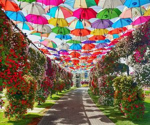 umbrella, colorful, and garden image