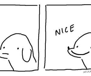 dog and nice image