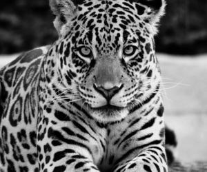 animal, black and white, and b&w image
