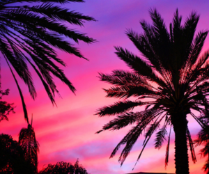 summer, pink, and sunset image