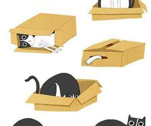 cat, box, and illustration image